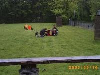 Sandy erster Tag in der Hundeschule 14.05.2005