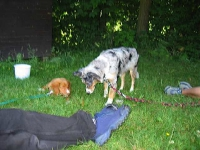 Dogfrisbee Schnupperkurs 01.07.2006