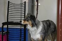 Dogfrisbee Anfänger II mit Karin Actun 14.10.2007