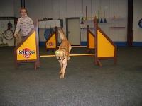 2007 CBF-Dogs