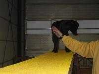 Fotos Halle mit Gruppe Tag des Hundes