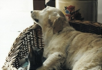 lustige Hundefotos 2007
