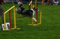 2010 CBF-Dogs