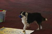 2011 CBF-Dogs