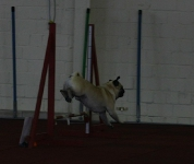17.04.2011 Agility for Funturnier Iserlohn